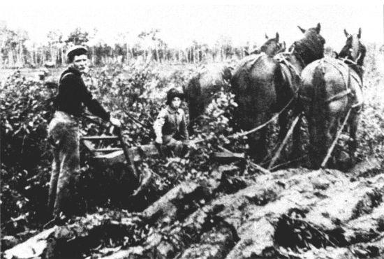Эмигранты из Украины за работой в поле.Канада.1904 г.